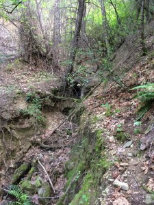 lost ravine