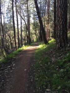 alt trail